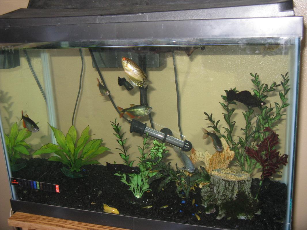 20 gallon aquarium welcome for 55 gallon fish tank lid